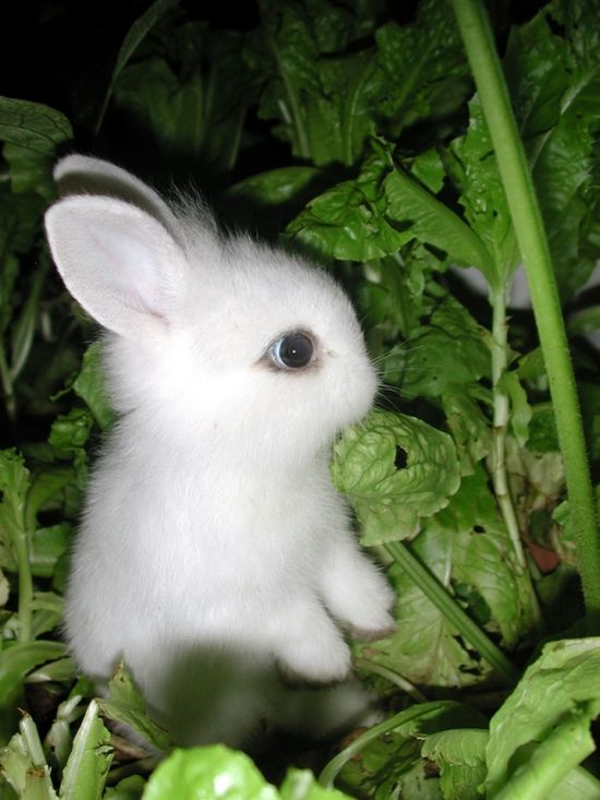 Think of bunnies as cute garden pets! :)