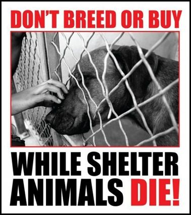Adopt a shelter animal.  Rescued dogs make the best pets!!!  www.theshelterpet...