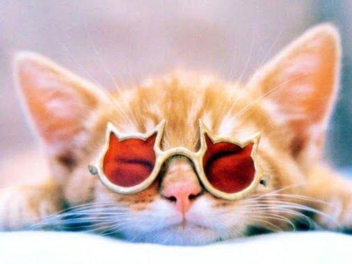 Cute Pets - Google+
