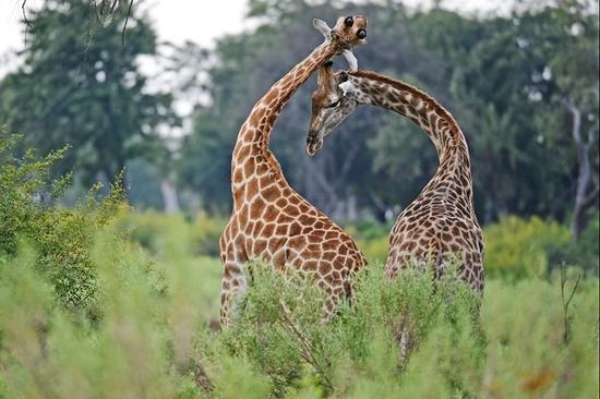 #wild animals