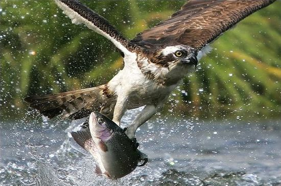 25 Incredibly Lucky Photographs Of Animals
