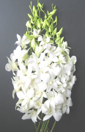 Orchids - exotic and elegant; send that special someone these fresh white or blue or purple dendrobium orchids that are guaranteed to please anyone in ...
