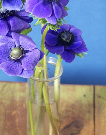 Add a few drops of vodka and a teaspoon of sugar to make cut flowers last longer.