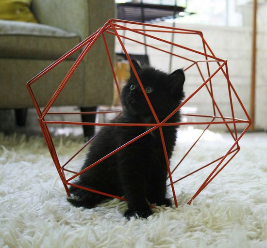 kitteh trap