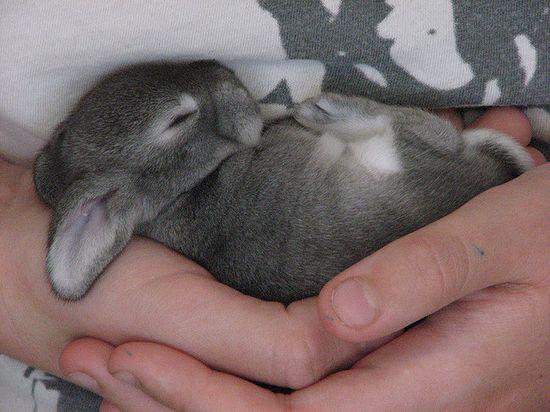 Little baby bunny!!