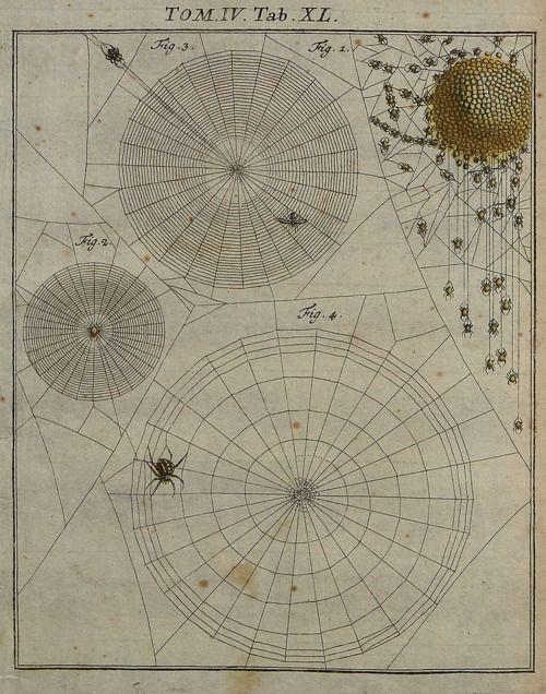 """Spiderwebs, from """"Insecten-Belustigung"""" by AJ Rösel von Rosenhof, 1746"""