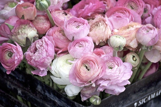 have I mentioned that I love ranunculus?
