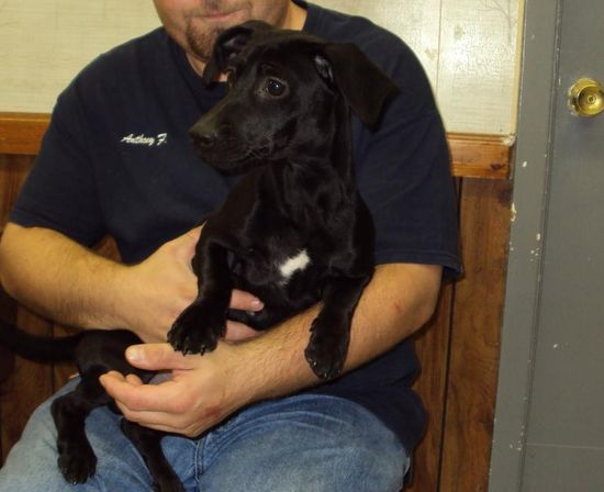 #ILLINOIS #URGENT ~  Remie is a Dachshund Doxie mix #puppy dog in need of a loving #adopter / #rescue --> We are receiving many dogs & puppies daily & each animal here will have a VERY LIMITED TIME. Please do not wait to contact us about any of these nice animals. JEFFERSON COUNTY ANIMAL CONTROL 107 E Perkins  #MtVernon IL 62864 mailto:jeffcoac@a... Ph 618-244-8024