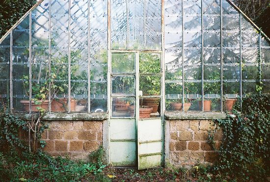 Ivy-covered brick-foundation greenhouse