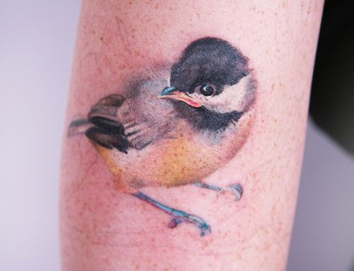 amanda wachob bird tattoo... i love her style. too bad i'm missed her while she was still tattooing in buffalo... now she's in nyc and booked like crazy