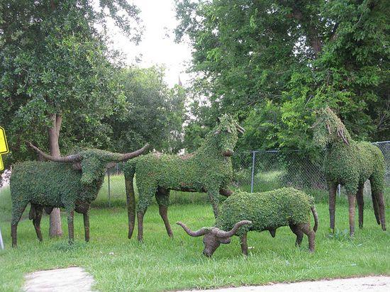 Topiary ranch animals by gtocruzr, via Flickr