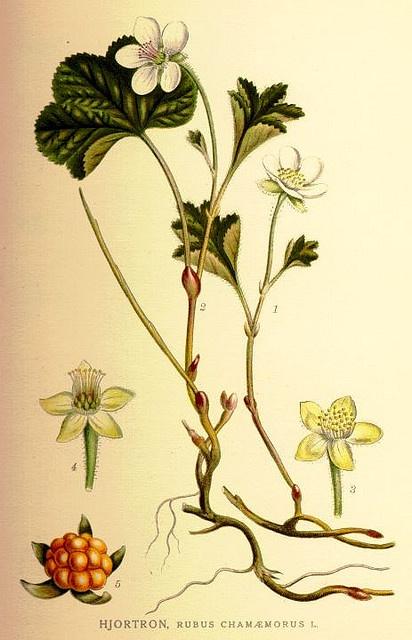 _love_ botanical illustrations