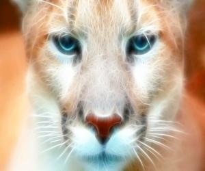 Fractal Cougar, animal, cat, cougar, fractal, wild
