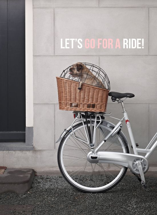 The most elegant pet bike basket ever! (Pssst! Click through and you could win one!)