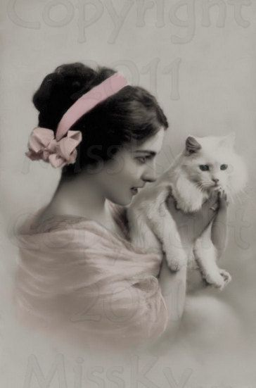 Vintage photo postcard cat