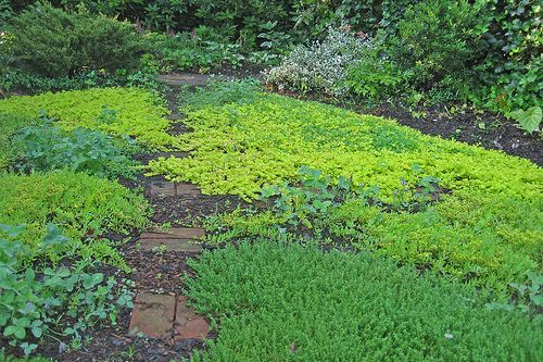 Best Ground Cover Pl