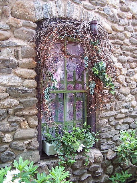 window with vines and succulents