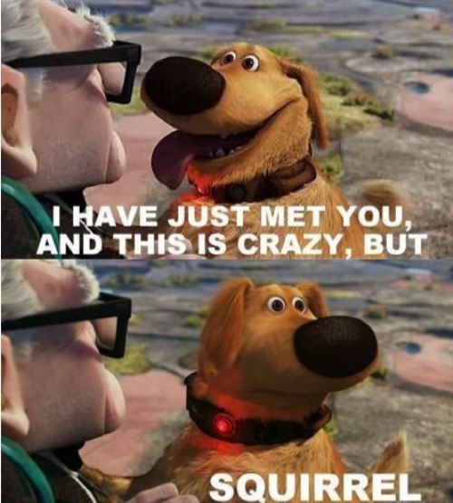 Up movie..lol