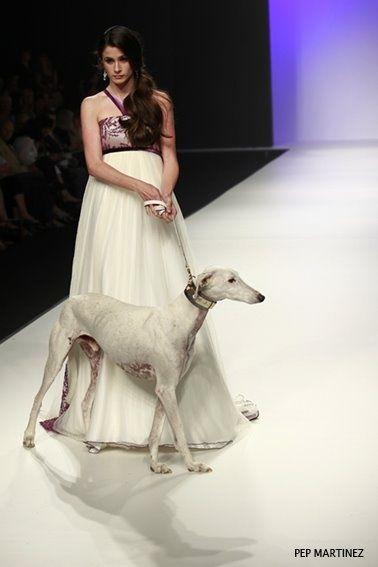 Baas Galgos - Pep Martinez.  #Cute pet #pet girl