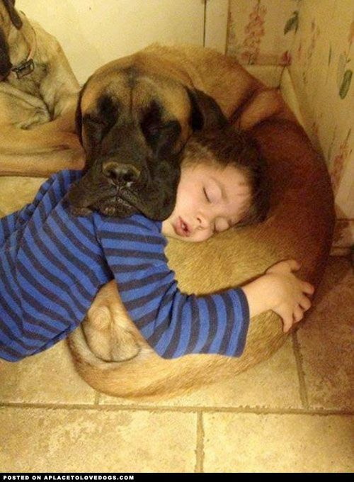 Sleeping Dog And Boy - A Place to Love Dogs
