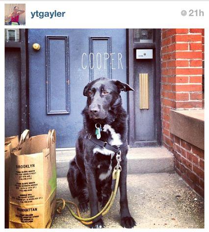 Cooper, the dog