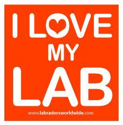 I love my Lab!!!!