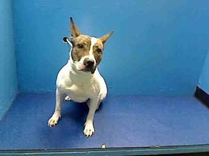 MY NAME IS TREASURE. I AM ON DEATH ROW! DIES FEB 22. THEY START KILLING AT 6 AM. AT THE BROOKLYN ACC. HURRY HURRY HELP. FOSTER! ADOPT! PLEDGE!