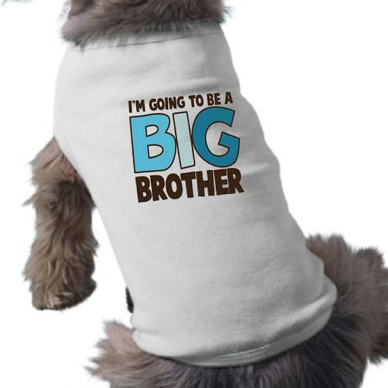 I'm Going To Be a Big Brother Dog Shirt - Dog T-Shirt - Graphic Tee - Pregnancy Announcement Dog Shirt on Etsy, $20.00
