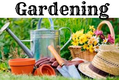 ❤ Gardening Ideas & DIY