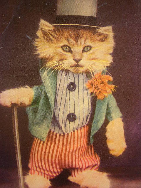 Vintage Dressed Gentleman Cat