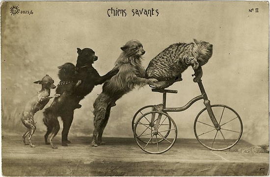 4 vintage circus dogs...and a cat.  on a bike.