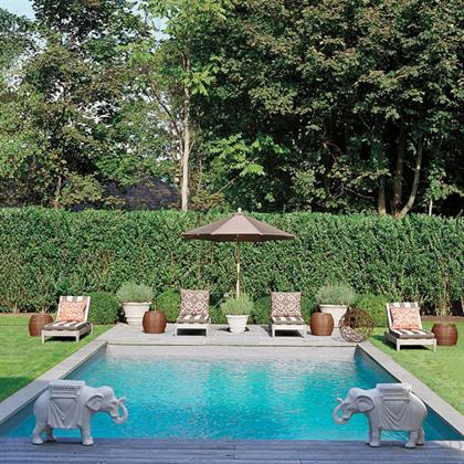 privacy hedge behind pool