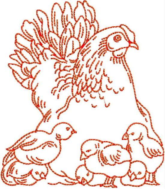 Coq et le poulet Red