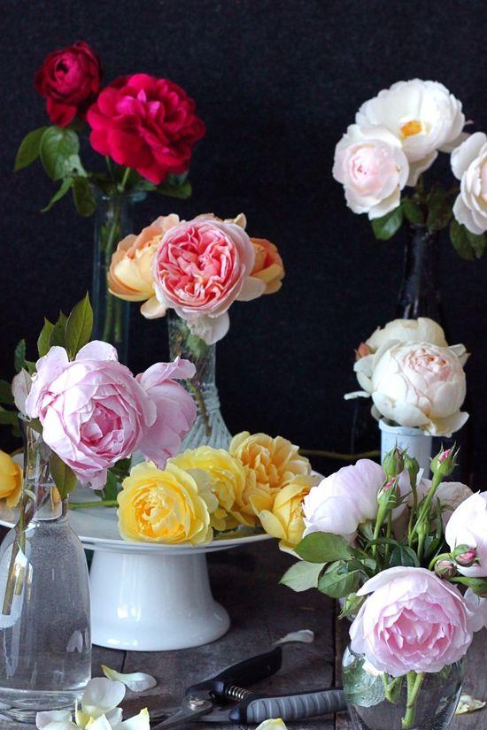 Roses, roses, roses