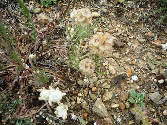 مدونة تاج: نباتات و
