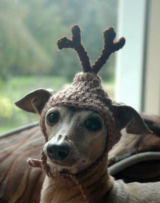 For Erin and Evie!  OMG! The Cutest ever! Dog hat - REINDEER - Christmas pet hat - Humorous Funny Antlers - 2 to 20 lb pets