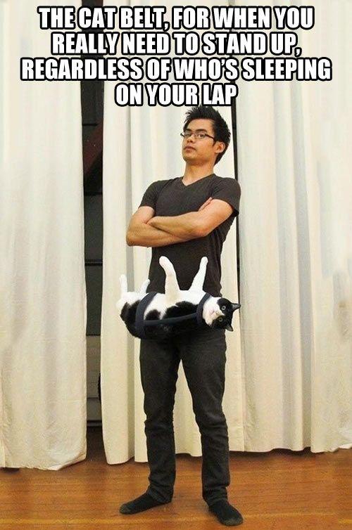 cat belt!