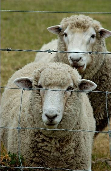 Livestock Control Non-Electric Fence Designs