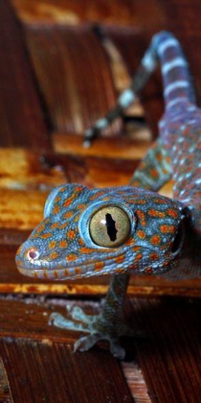 #lizards