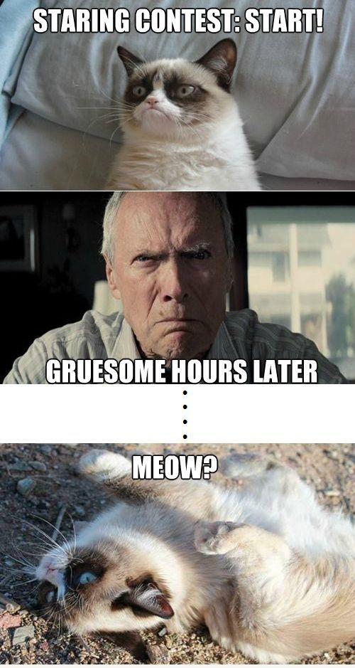 Grumpy finally defeated.  #GrumpyCat #Meme
