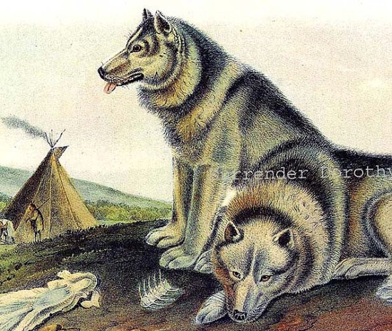 Alaskan Malamute Husky Dog John J Audubon Wild Animal Lithograph Print