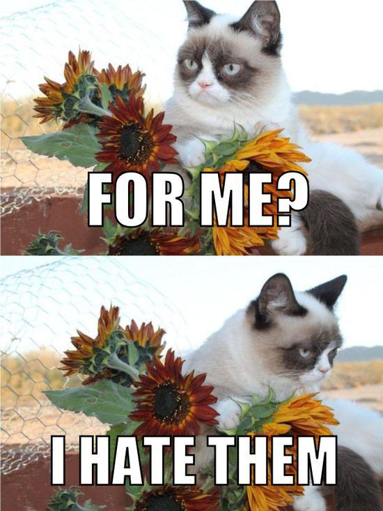Grumpy Cat gets a gift