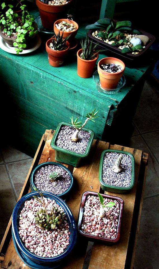 The Rainforest Garden: Interior Design with Plants - photo by Mary Ellen Gambutti