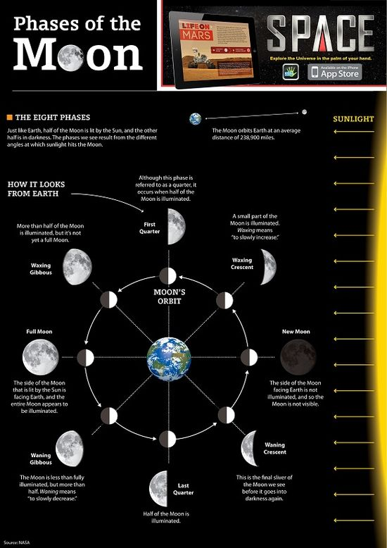 FREE printable infographic : Phases of the Moon I love Kids Discover!