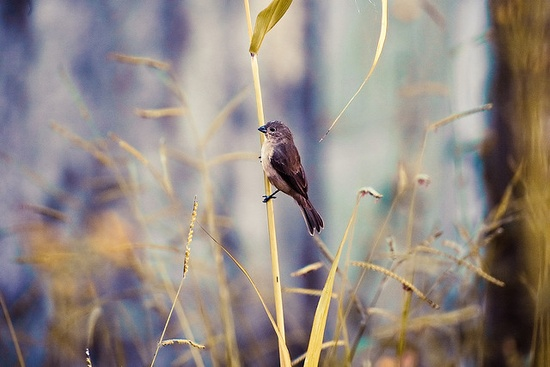 Little Bird  Little bird, Little bird, Little bird What d'you hear? The clink of morning cheers? Orange juice, concentrate, crossword puzzle, start to grade One across, four letter word It's just not sitting  ~ Little Bird - Imogen Heap