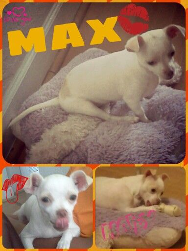 My baby dog