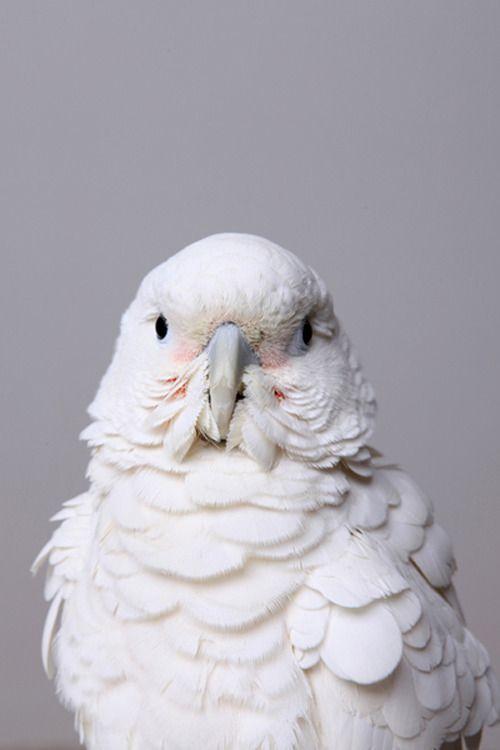 Lovely bird.