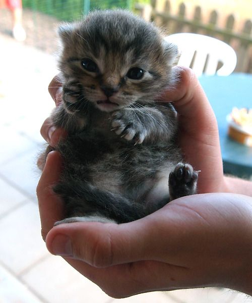 Even though I'm allergic, kittens are so fricken cute!