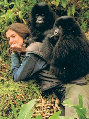 Dian Fossey with gorillas. She was a pioneer in the field of primate studies and was one of the first scientists to recognise that animals have feelings.