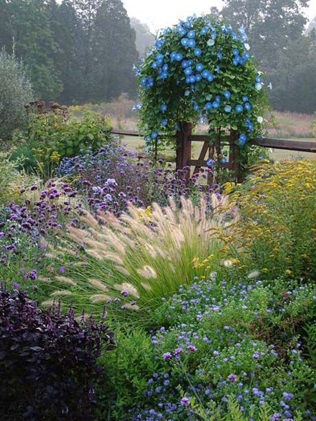 Some things to go with wonderful white ornamental grass ....  verbena & morning glory